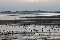 Europe/France/Picardie/80/Somme/Baie de Somme/ Le Hourdel: Paysage  de la Baie de Somme, en fond Le Crotoy