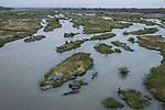 Common Hippopotamus (Hippopotamus amphibius) in river, Olifants River, Kruger National Park, South Africa