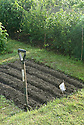 A freshly prepared seedbed on an allotment veg plot, early June.