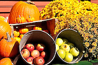 Colorful autumn display of flowers and fruit.