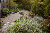 Steps into gravel patio in backyard naturalistic drought tolerant California native plant garden