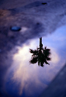 Silhouetted palm tree reflected in water - tree in focus<br />