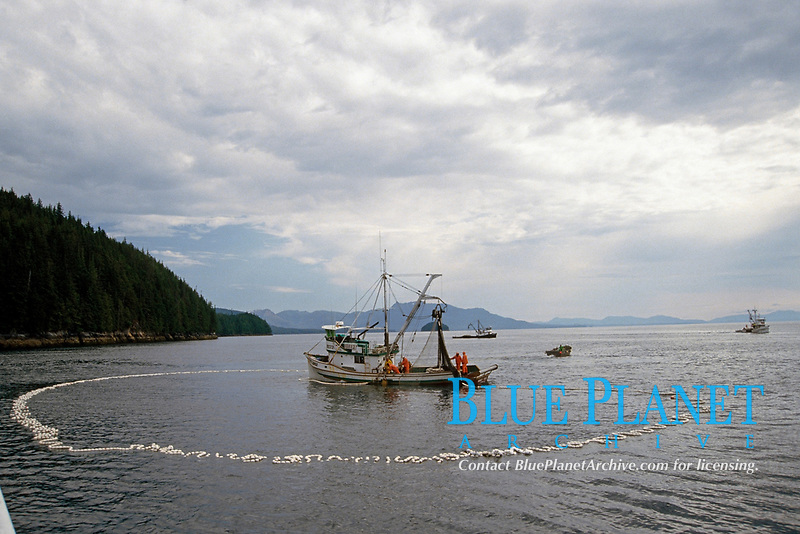 commercial fishing vessel fishing for pink salmon, Oncorhynchus gorbuscha, in southeast Alaska, USA, Pacific Ocean, seiner
