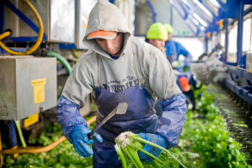 G's vegetable growers near Ely in Cambridgeshire. The company employs and provides accommodation and facilities for many workers from Eastern Europe. <br /> <br /> https://www.ft.com/content/a95ecb20-bd66-11e6-8b45-b8b81dd5d080