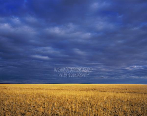 Prairie after Rain storm, Texas Panhandle, Texas, USA