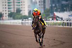 SHA TIN, HONG KONG – December 5:In Her Time at trackwork on December 5 at Sha Tin Race Course in Hong Kong before starting in the Longines Hong Kong Sprint. Michael McInally/Eclipse Sportswire/CSM