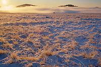 Frosted grasslands<br />   near Crescent Lake<br /> White Mountains<br /> Colorado Plateau,  Arizona