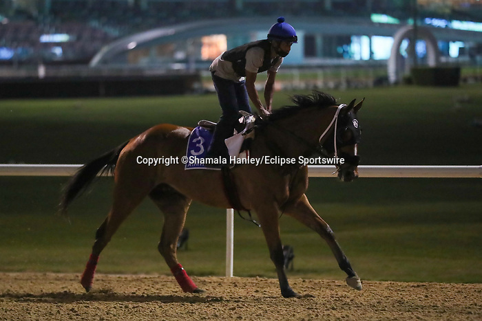 March 25, 2021: Godolphin Mile contender Avant Garde on the track at Meydan Racecourse for trainer Gustavo Delgado, Dubai, UAE.<br /> Shamela Hanley/Eclipse Sportswire/CSM