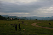 Lipcha, Ukraine.June 8, 2005 ..Kopan field where three men watch their cows in the morning.