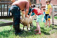 Sheep Washing