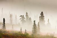 Morning fog over the tundra and boreal forest, Denali National Park, Interior, Alaska.