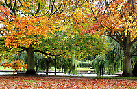 OCT 22 Bedford Autumn Colours