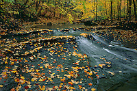 Sugar maples and Bridal Veil Creek<br />