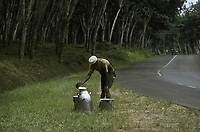 The Firestone rubber plantation. A rubber tapper with buckets containing fresh tapped rubber - Harbel, Montserrado county, Liberia - 1976