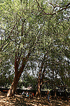 G-013 Golden Park in Kiryat Shmona
