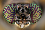 """Pictured: A Tiphia, a small sweet black bee<br /> <br /> Incredibly detailed close-up photos of insects make them look like creatures straight from a science-fiction film.  The extreme macro photographs make flies, dragonflies, a grasshopper, ants, wasps, a bee and beetles appear lifesize and show them in detail impossible to see with the naked eye.<br /> <br /> The photographs were taken by Lessy Sebastian in Jakarta, Indonesia, who found all the bugs in his garden.  Mr Sebastian, 57, said: """"I was just amazed when I looked back at the photos.  SEE OUR COPY FOR DETAILS.<br /> <br /> Please byline: Lessy Sebastian/Solent News<br /> <br /> © Lessy Sebastian/Solent News & Photo Agency<br /> UK +44 (0) 2380 458800"""