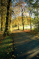 Autumn colours, Linn Park, Glasgow