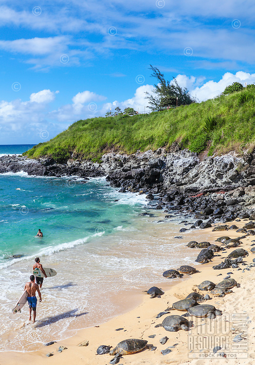 Hawaiian green sea turtles rest at Ho'okipa Beach while people keep a respectful distance and enjoy the sea.