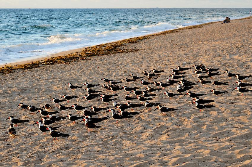 Hillsboro Beach, Hillsboro, FL, United States