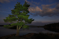 """White Pine on Kwanipi Lake""<br />