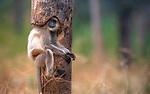 Monkey fits snuggly inside shape of tree by Aman Wilson