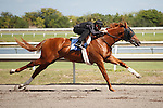 #61Fasig-Tipton Florida Sale,Under Tack Show. Palm Meadows Florida 03-23-2012