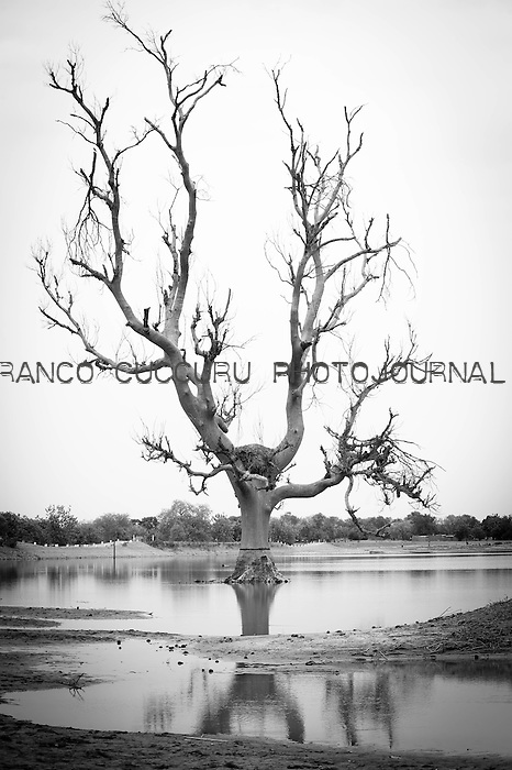 African Baobab, big trees of Africa