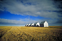FARM EQUIPMENT SHEDS ON HARVESTED WHEAT FIELD EAST OF CALGARY.