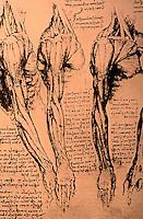 Visual Arts:  Leonardo Drawing--Arm muscles.  Photo '84.