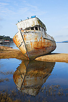 """POINT REYES RELIC""<br />