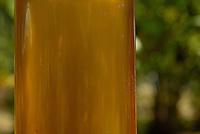 Óleo de Andiroba Árvore de grande porte, que chega a atingir 30 metros de altura. O fuste (parte que vai do solo aos primeiros galhos) é cilíndrico e reto. A casca é grossa, tem sabor amargo e desprende-se facilmente em grandes placas. Copa de tamanho médio e bastante ramosa. A inflorescência é uma panícula (espécie de cacho). As flores têm cor creme e o fruto é uma cápsula que se abre quando cai no chão, liberando de quatro a seis sementes. Floresce de agosto a outubro na Amazônia e frutifica de janeiro a maio. Porém, há muitas variações dependendo da região.É nativa da Amazonia.O oleo e as gorduras são extraidos e utilizados para a produção de: REPELENTES DE INSETOS, ANTISSEPTICOS, CICATRIZANTES e ANTIINFLAMATORIOS.<br /> Salvaterra, Marajó, Pará, Brasil<br /> Foto Paulo Santos/Interfoto<br /> 01/11/2008