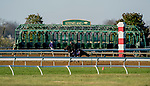 November 4, 2020: Wet Your Whistle, trained by trainer Michael J. Trombetta, exercises in preparation for the Breeders' Cup Turf Sprint at Keeneland Racetrack in Lexington, Kentucky on November 4, 2020. Scott Serio/Eclipse Sportswire/Breeders Cup