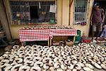 Nautilus shells collected for the decorative market(Nautilus pompilius)