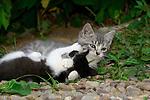 Kittens, Springdale Farms