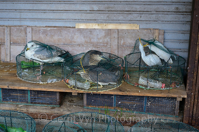 Wild birds for sale in a market in Zhanjiang, China.