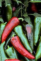 HS41-002e  Pepper - Italia variety