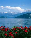 Schweiz, Kanton Luzern, Weggis: Blick ueber den See in die Schweizer Zentralalpen | Switzerland, Canton Lucerne, Weggis: view across the lake towards Swiss Central Alps