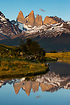 Upland Goose (Chloephaga picta) pair and mountains, Torres del Paine, Torres del Paine National Park, Patagonia, Chile