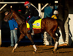 April 26, 2021: Helium gallops in preparation for the Kentucky Derby at Churchill Downs in Louisville, Kentucky on April 26, 2021. EversEclipse Sportswire/CSM
