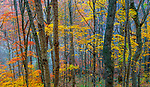 Autumn colors, Smoky Mountains, North Carolina, USA