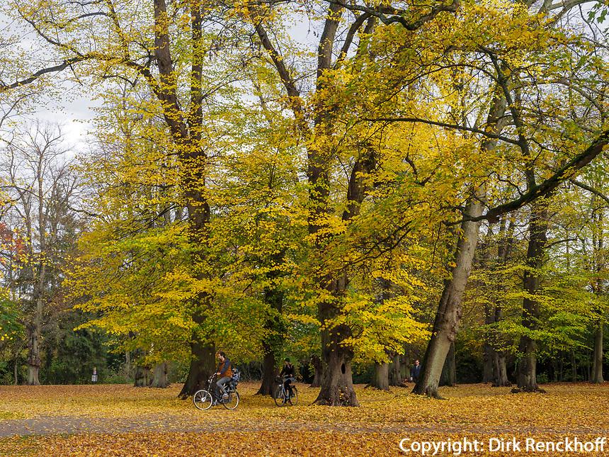 Altweibersommer, Hirschpark in Hamburg-Blankenese, Deutschland, Europa<br /> Indian Summer, Hirschpark in Hamburg-Blankenese, Germany, Europe