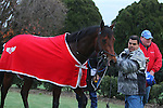January 18, 2016: Discreetness leaving the winners circle after winning the Smarty Jones Stakes at Oaklawn Park in Hot Springs, AR. Justin Manning/ESW/CSM
