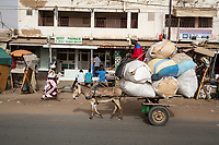 Senegal, Touba.  Donkey Pulling Bags of Cardboard for Recycling.