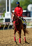 MAY 14, 2021: France Go De Ina jogs in preparation for the Preakness Stakes at Pimlico Race Course in Baltimore, Maryland on May 14, 2021. EversEclipse Sportswire/CSM