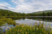 Lily Pond  in Livermore, New Hampshire USA during the summer months. This pond is located along the Kancamagus Highway (route 112), which is one of New England's scenic byways. in the White Mountains.