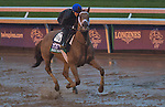 October 28, 2015 :  Red Rifle, trained by Todd A. Pletcher and owned by Twin Creeks Racing Stable LLC, exercises in preparation for the Longines Breeders' Cup Turf at Keeneland Race Track in Lexington, Kentucky on October 28, 2015.  Scott Serio/ESW/CSM