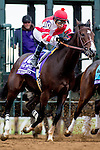 October 31, 2015 :  Songbird, ridden by Mike E. Smith, leaves the starting gate during the 14 Hands Winery Breeders' Cup Juvenile Fillies (Grade I) in Lexington, Kentucky on October 31, 2015. Zoe Metz/ESW/CSM