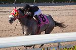 January 16, 2016: X Y Jet and jockey Emisael Jaramillo roll to an easy win in the Sunshine Millions Sprint Stakes at Gulfstream Park, Hallandale Beach (FL). Arron Haggart/ESW/CSM