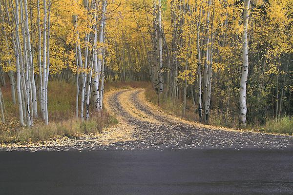 Off the beaten path, autumn, San Juan Mountains, Colorado. John offers autumn photo tours throughout Colorado.