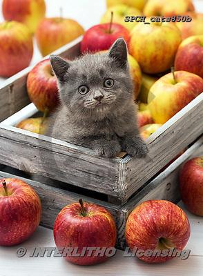 Xavier, ANIMALS, REALISTISCHE TIERE, ANIMALES REALISTICOS, cats, photos+++++,SPCHCATS850B,#a#
